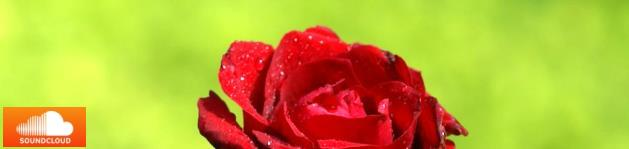 schoene_rose_logo