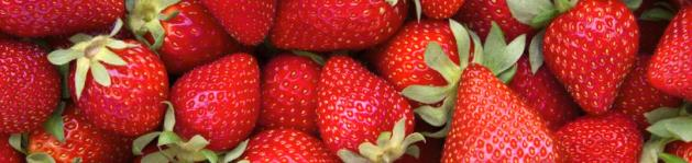 erdbeeren